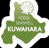 FOSSIL SEASHELL KUWAHARA